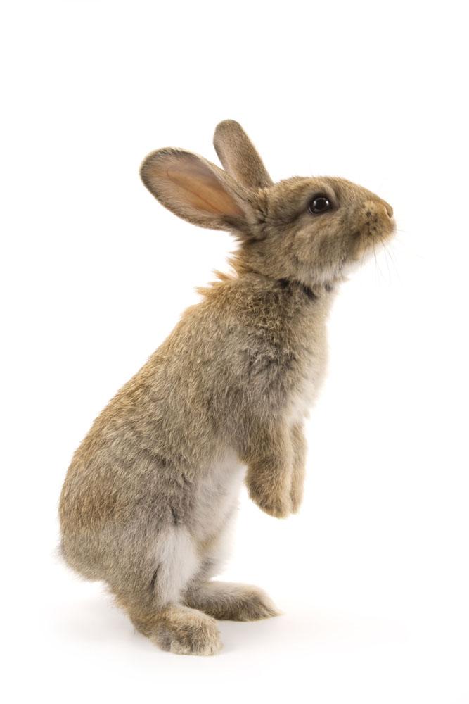 养兔管理中,要尽早发现病兔