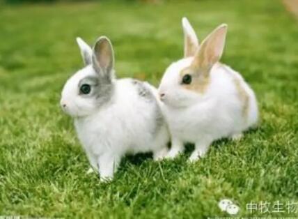 """幼兔饲养管理新技术,让你的爱兔赛过""""玉兔"""""""