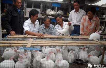 断奶幼兔饲养四注意,如何提高养兔PSY