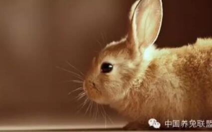 【养兔】仔幼兔饲养管理规范和防病技术