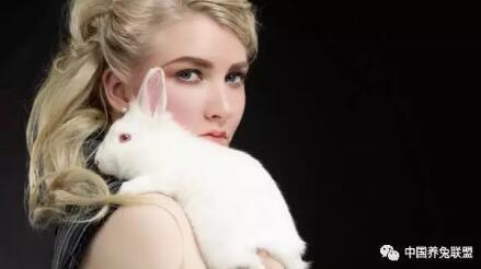断奶幼兔如何饲养?宠物兔幼兔饲养注意事项