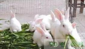 仔兔与幼兔的饲养管理有什么区别?开眼期,睡眠期