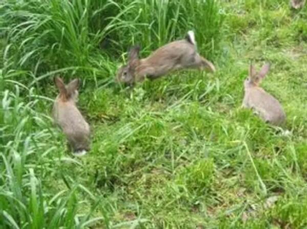 养殖规模小的,兔贩子不上门收购