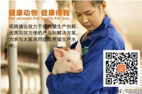 不同产仔季节对母猪繁殖性能的影响不可忽视