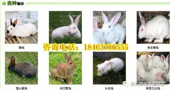 快手兔仙啪啪视频网