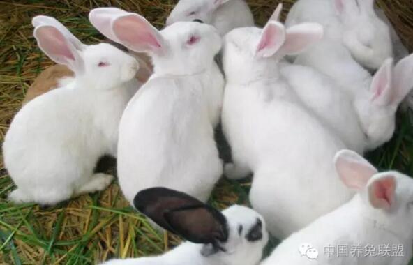 守株待兔的故事
