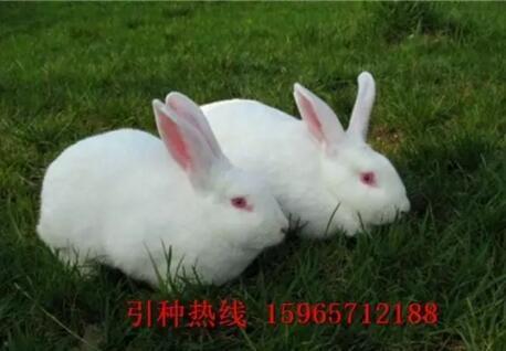 兔肉怎么做好吃