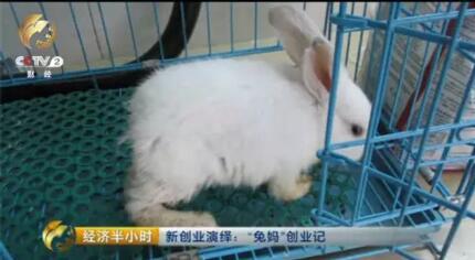 没有耳朵的兔子