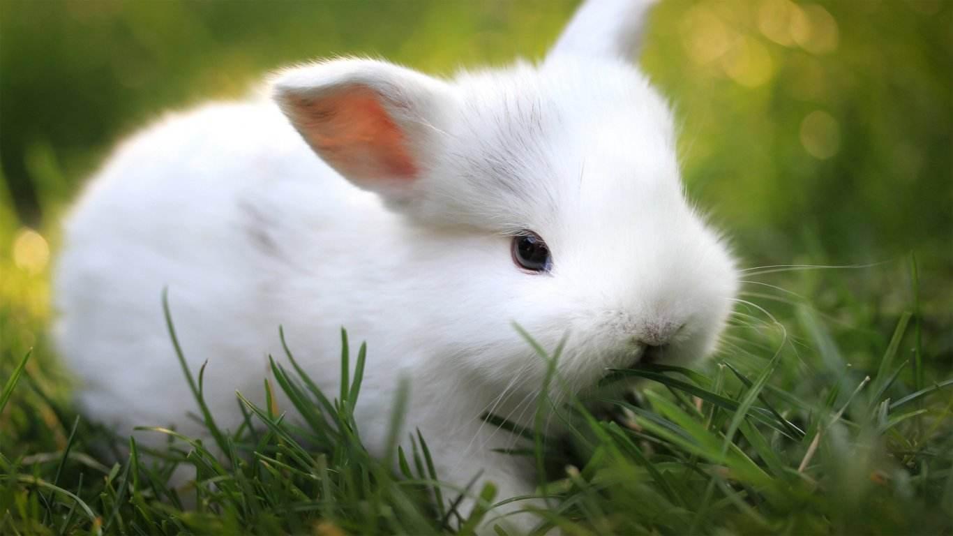 点将 抽烟的兔子