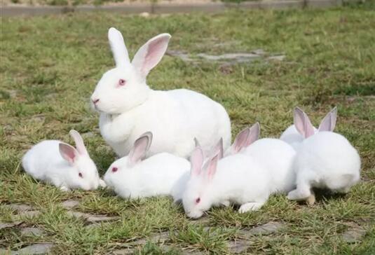 兔子优化大师