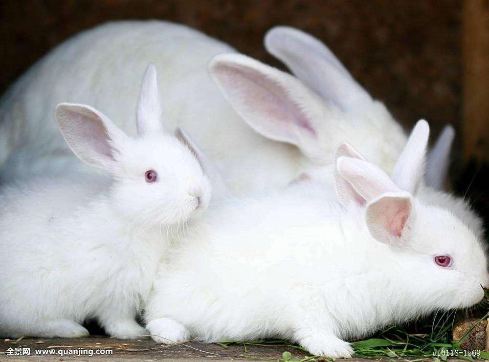 不一样的兔子动画片