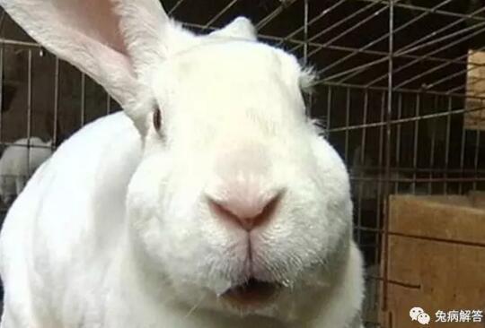 超级兔子桌面秀