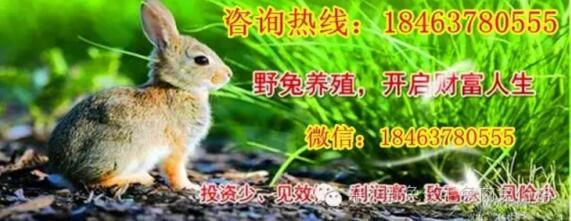 请问您今天要来点兔子吗第二