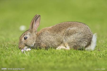 兔子帮之勇闯螃蟹岛
