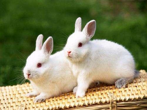 那兔子太恐怖啦