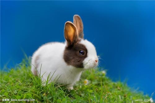 占有欲 耳东兔子