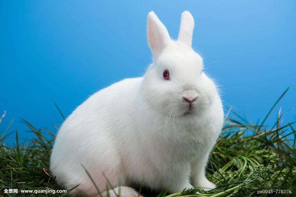 小兔子乖乖伴奏