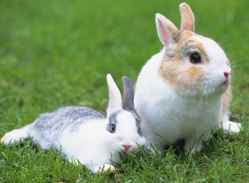 请问您今天要来点兔子吗?
