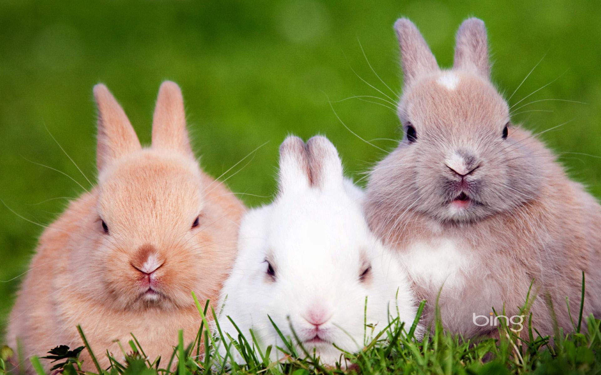 兔在生长过程中易患多种疾病,应用中药治疗兔病