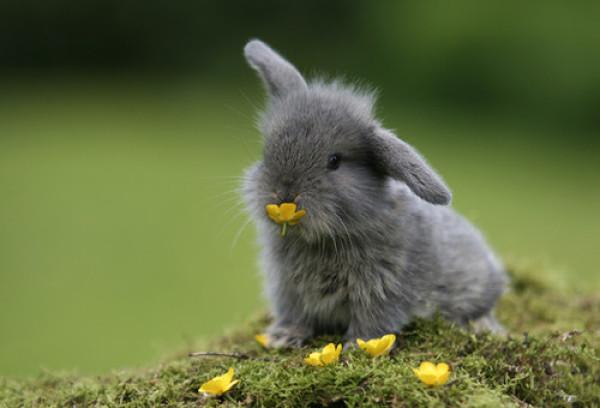 """从领养小兔子到募捐义卖再到以此创业 """"兔妈""""用爱成就创业路"""