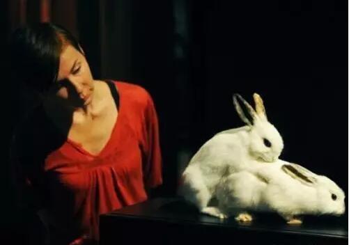秋季是家兔繁殖的黄金季节,为促使母兔发情