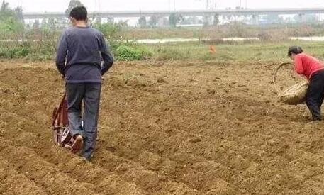 当前,黄淮海、长江流域及以南地区花生春播即将开始