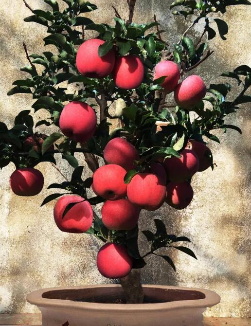 农产品优质化、高档化,消费者信任