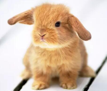 养殖场遭受了巨大损失――300只兔子被冻死