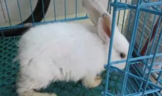 从卖兔子明信片,到卖兔子食品,再到卖兔子肖像